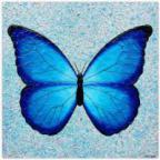 Motyl Avatar